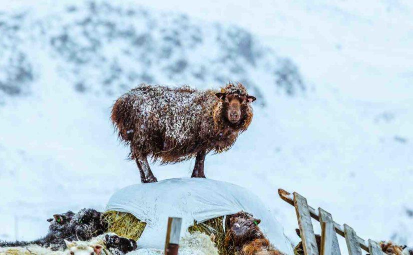La conversione di un uomo di scienza nell'Islanda disperata di fine '700